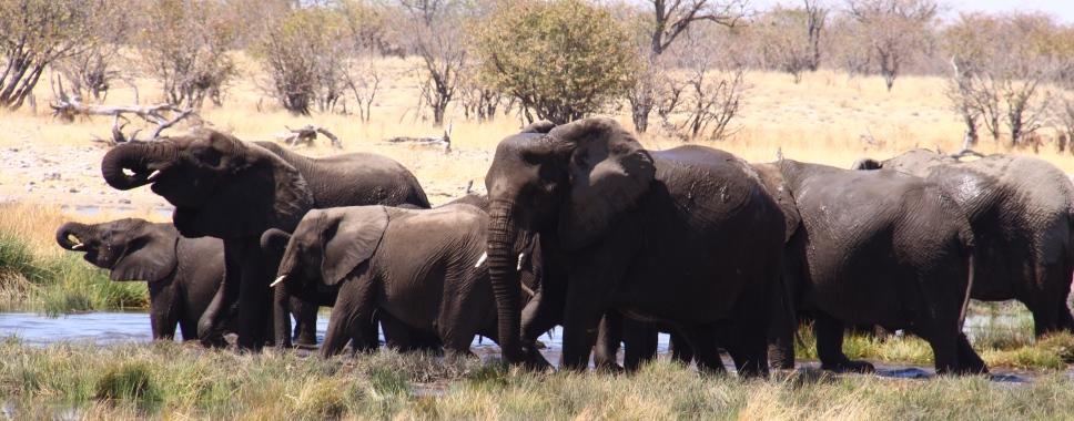טיול מאורגן לנמביה בוטצוואנה