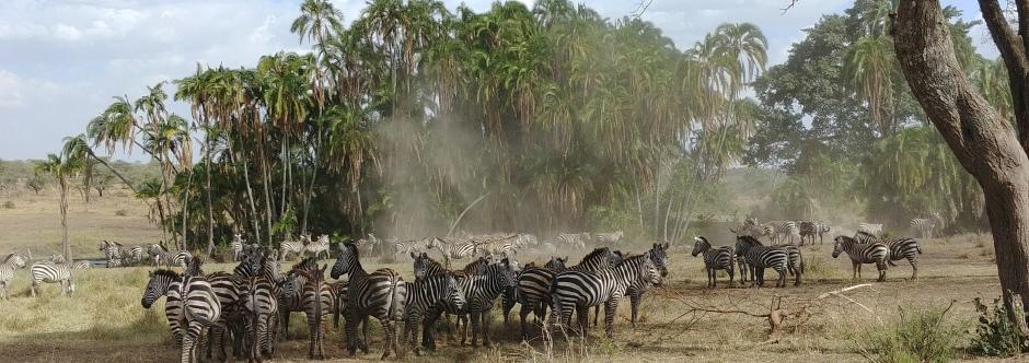 טיול מאורגן לטנזניה