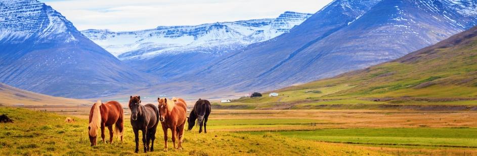 טיול מאורגן לאיסלנד