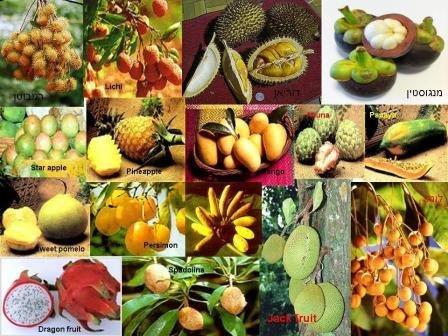 פירות אקזוטים